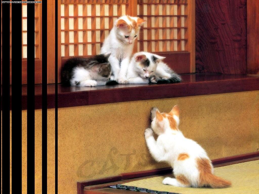可爱小猫咪(内空)
