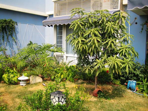 手绘庭院树素材