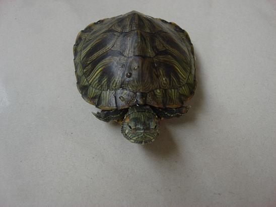 活泼可爱的小乌龟 - 深圳房地产信息网论坛