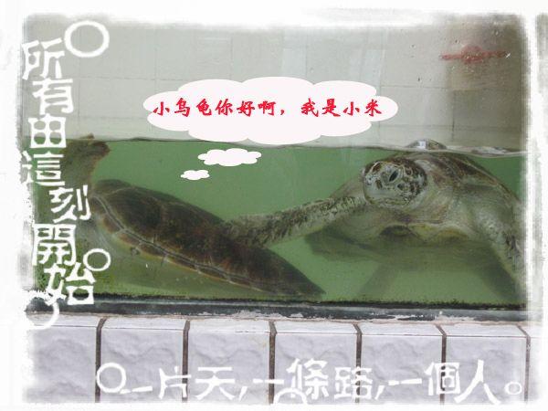 小乌龟的亲密接触
