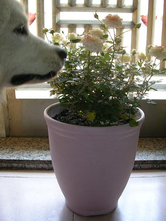 qq头像男生 帅气 植物
