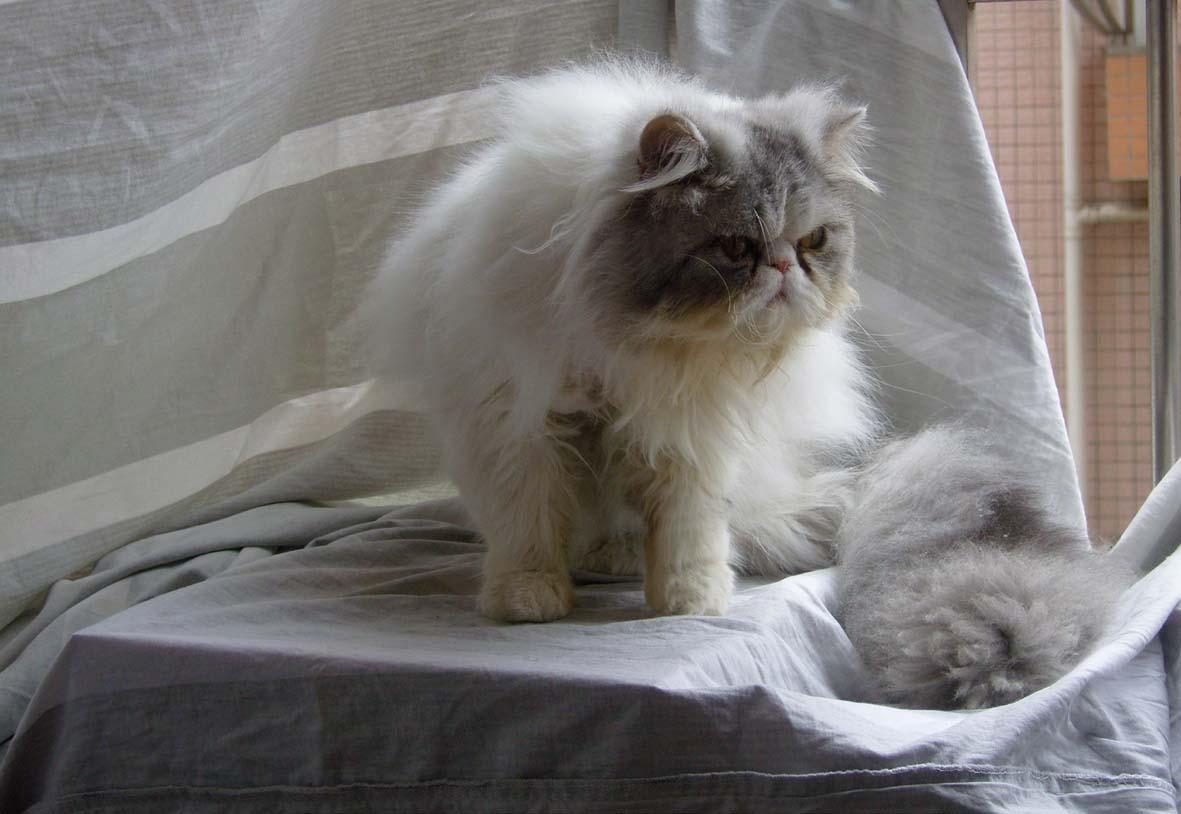 宇宙超级无敌可爱小加菲猫!