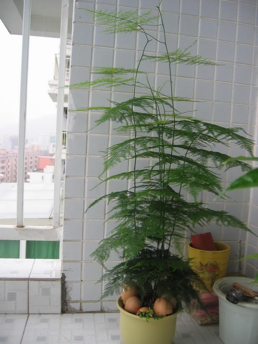 十八种室内植物的作用与功效(摘自网络) - 潇雨 - 潇雨的博客屋