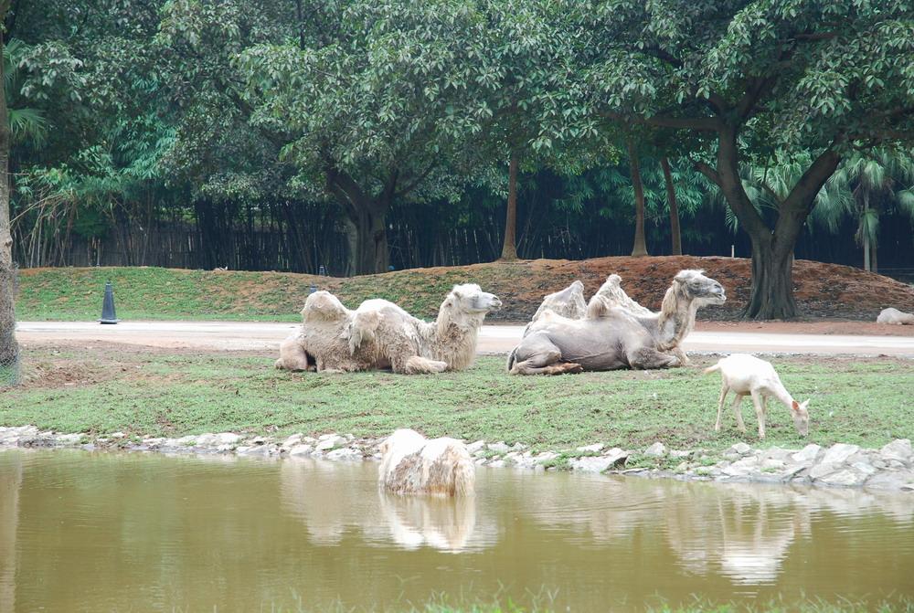 分享——长隆野生动物园之行 - 深圳房地产信息网论坛