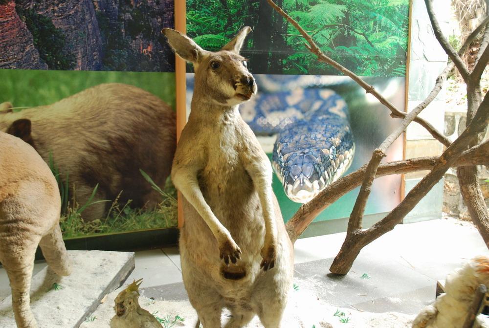 分享——长隆野生动物园之行