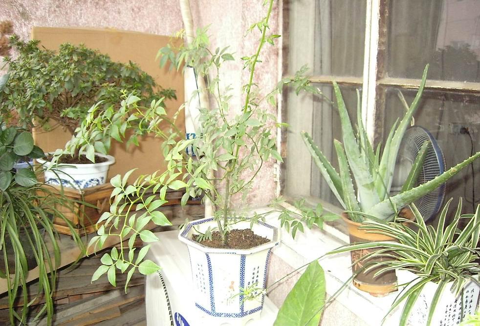 花卉栽培(四)图片
