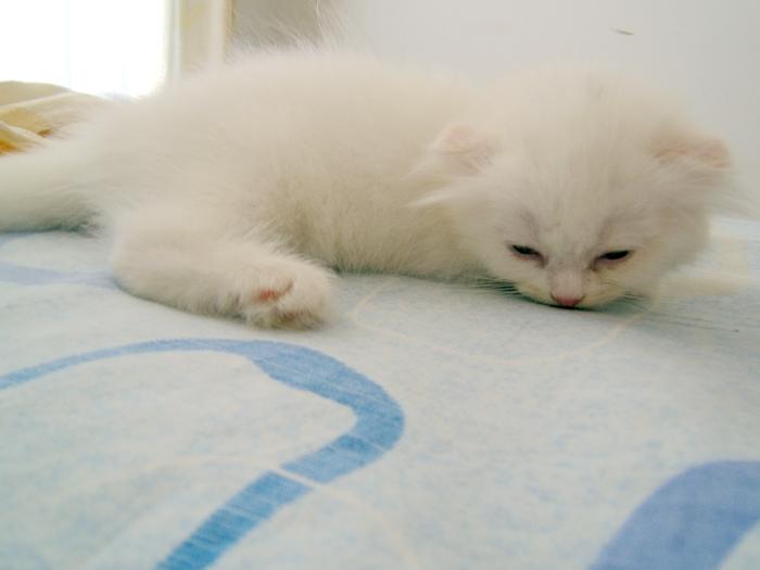 猫咪可爱亲亲gif