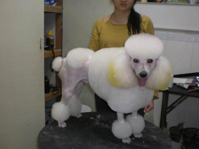 名犬图片,狗图片,世界名犬图片,犬欣赏,宠物狗图片; 专业宠物美容