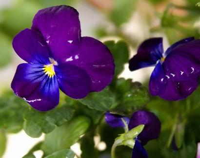 紫色小花房子
