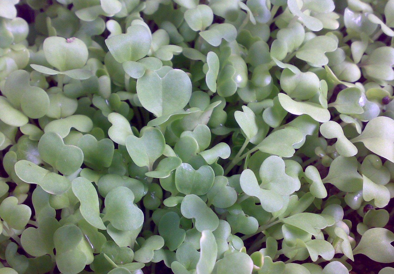 植物发芽生长过程