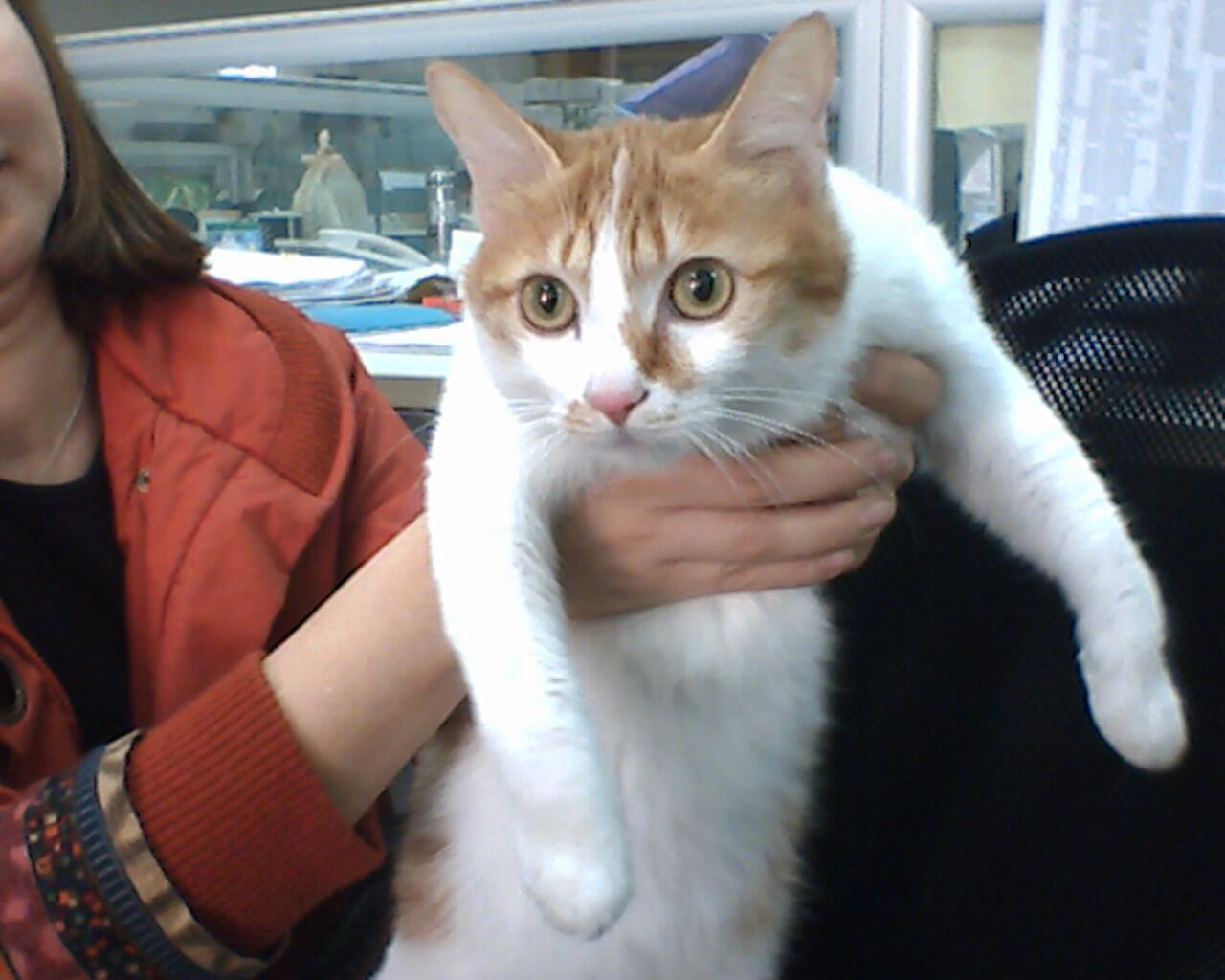 > 可爱的猫咪
