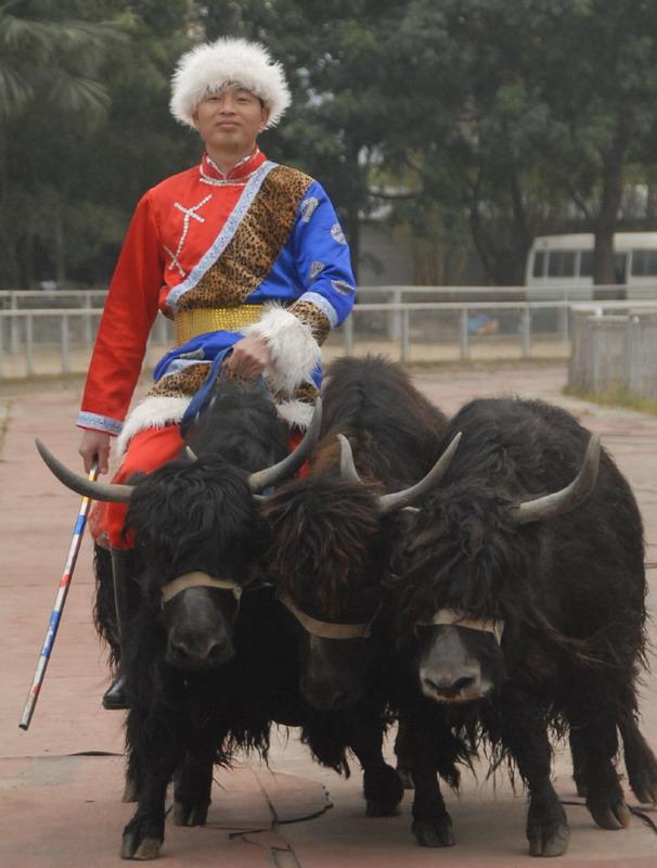 深圳野生动物园春节精彩节目多多!天天成团!