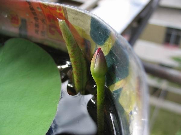 树叶鹦鹉贴画步骤