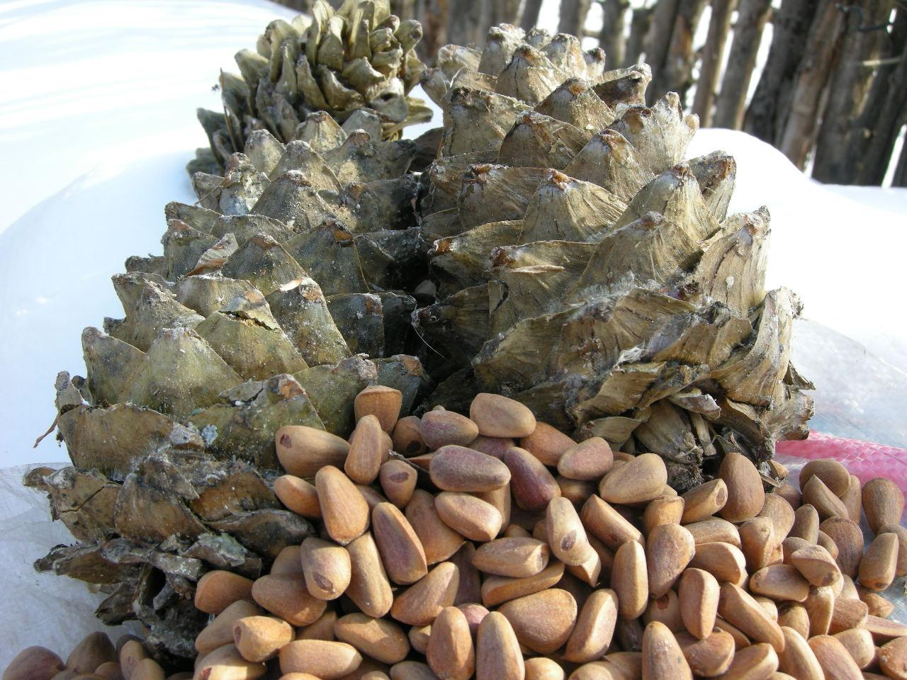 长白山的土特产 雪蛤干 红松子 榛蘑 食品特产