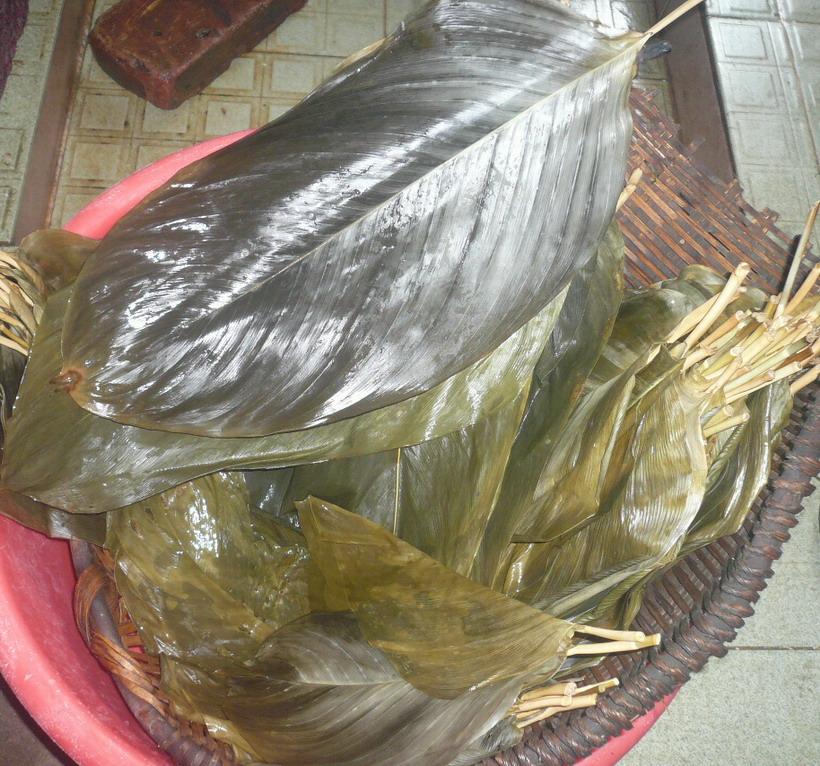 包粽子的冬叶