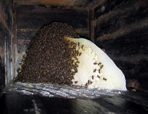 6,注意,标准中华蜜蜂的蜂箱里面可不