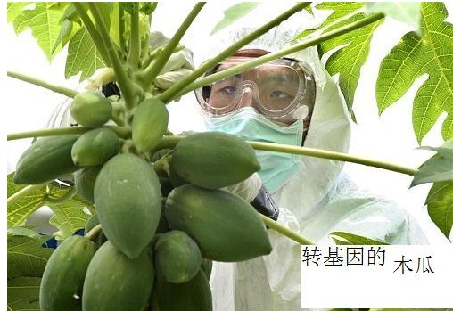 转基因食品危害宣传【图】 - 柏村休闲居 - 柏村休闲居