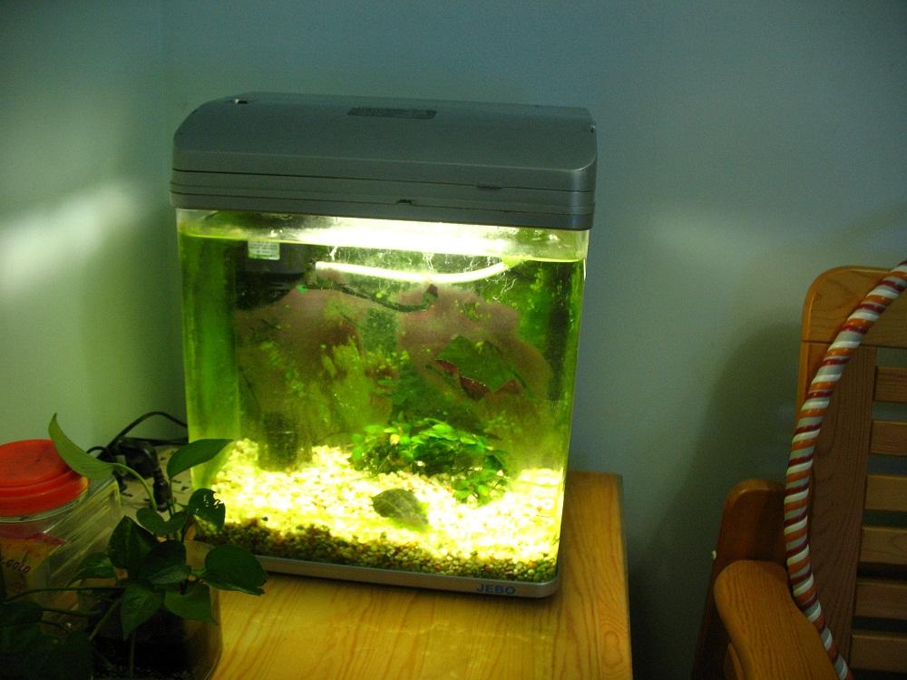 [转让]佳宝r138 鱼缸和一个养过斗鱼的小鱼缸转让