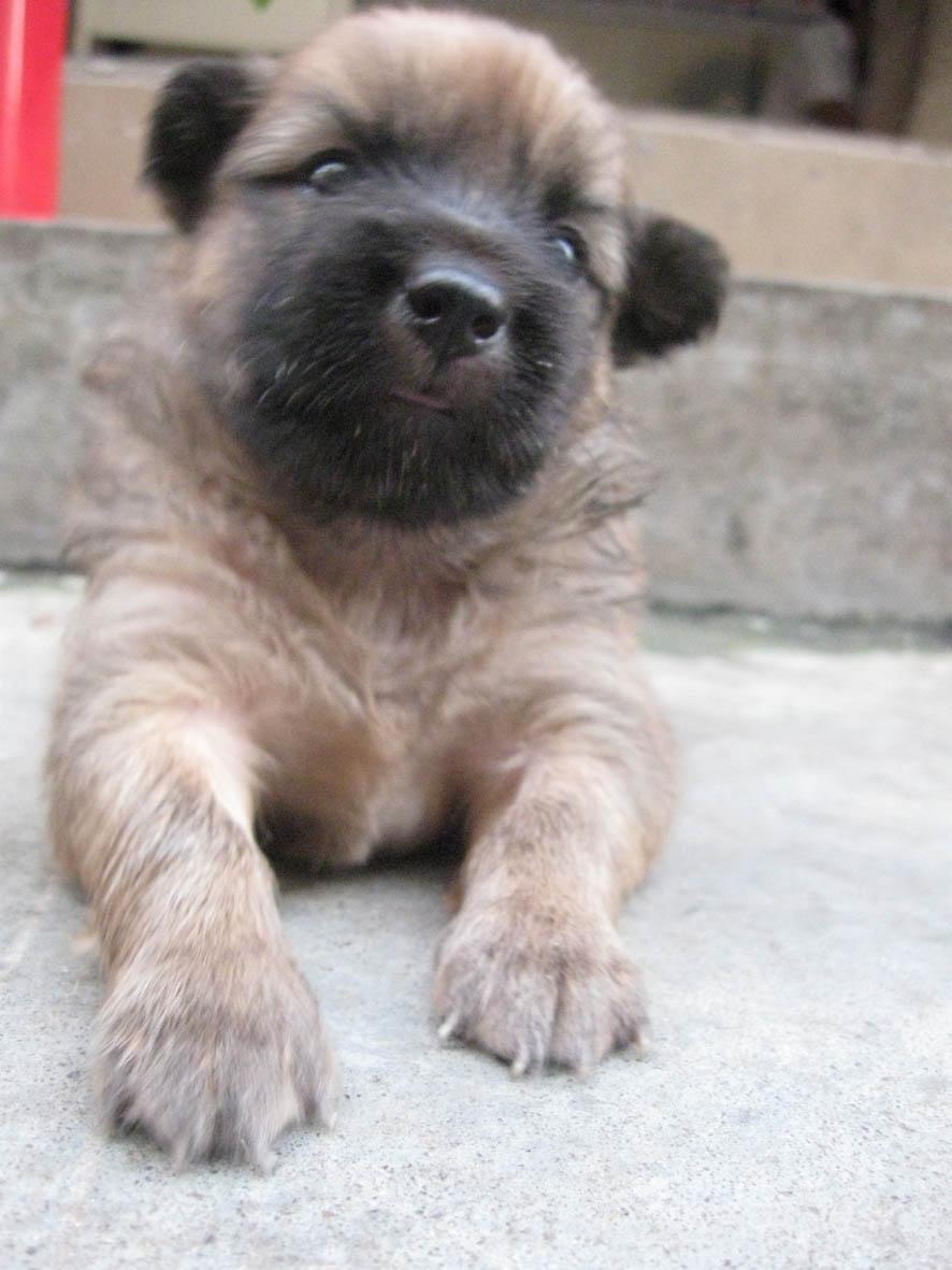 > 出售可爱漂亮的小型串串狗啦