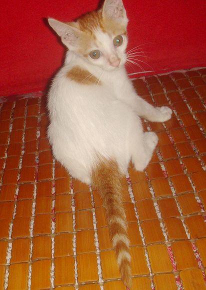 琪琪,性格超好的可爱小白猫