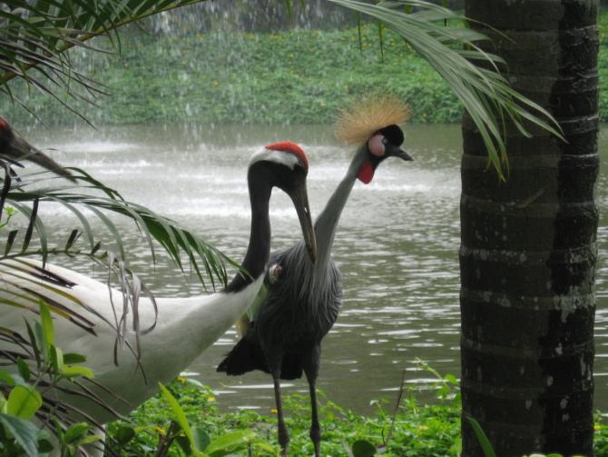深圳野生动物园喷水池左边蓝色旗子