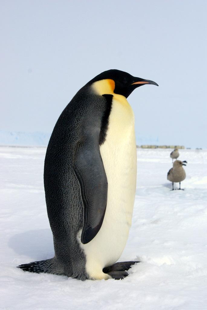 如何与南极野生动物亲密接触?
