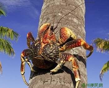 ... 螃蟹,世界上最恐怖的螃蟹,世界上最奇特的螃蟹_点力