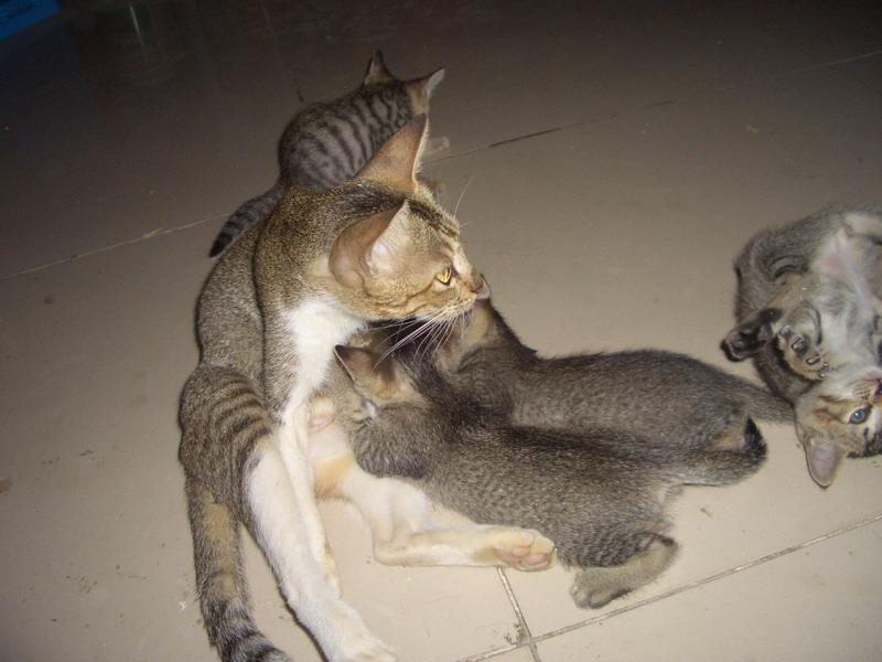 有四只能抓老鼠的小猫待领养