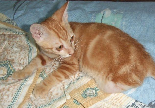 可爱车轮推钱小猫咪待领养,真正的招财猫