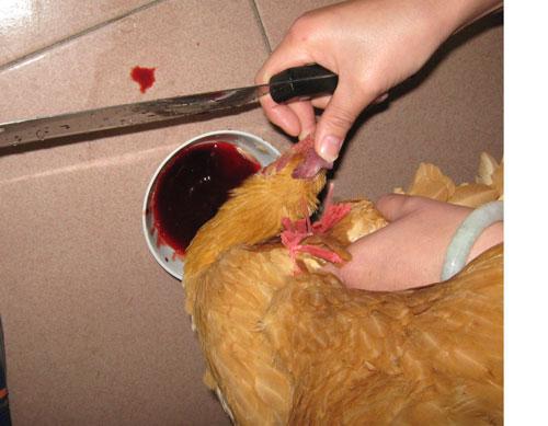 年夜饭我是这样鸡的哈哈