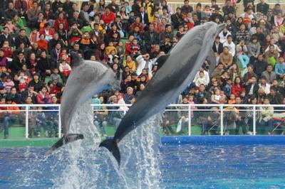 大人好心情【深圳野生动物园】海洋天地