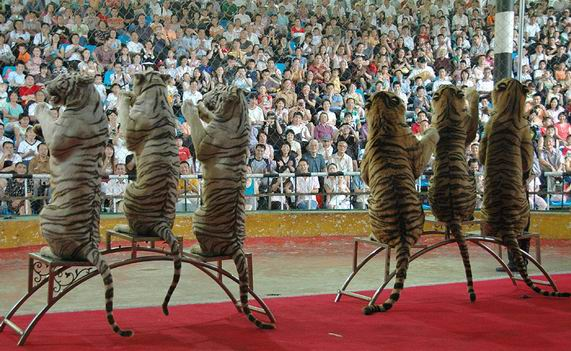 深圳野生动物园优惠门票