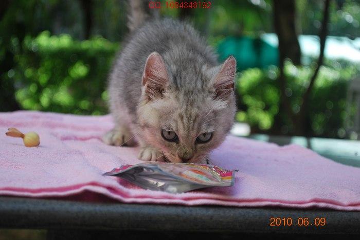 > 我家刚出生不久的小猫猫,欢迎来我家看猫