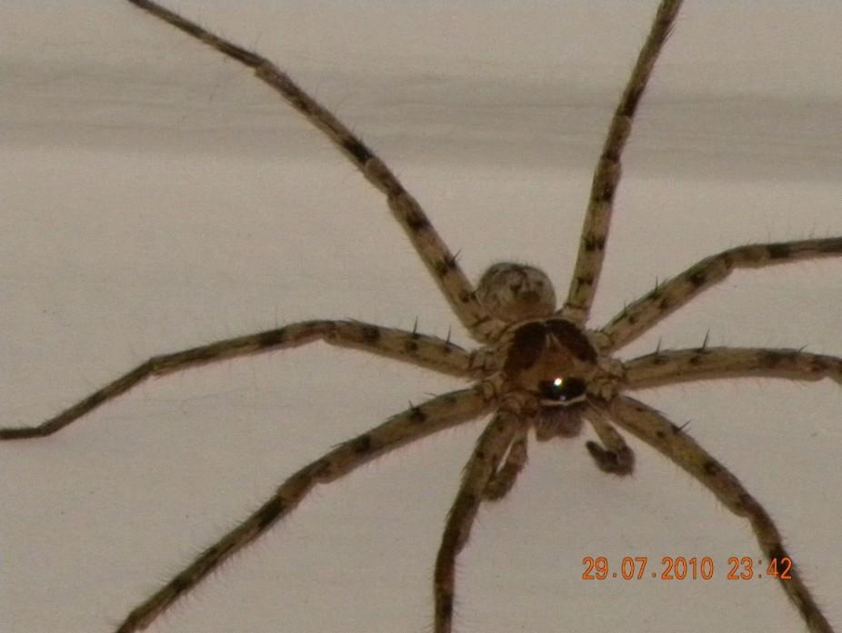 大蜘蛛在家里的图片 家里大蜘蛛图片 家里来了大 ...